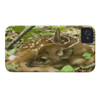 Shenandoah NP, Virginia, USA iPhone 4 Cover