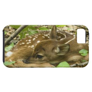 Shenandoah NP, Virginia, USA iPhone SE/5/5s Case