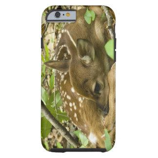 Shenandoah NP, Virginia, USA Tough iPhone 6 Case