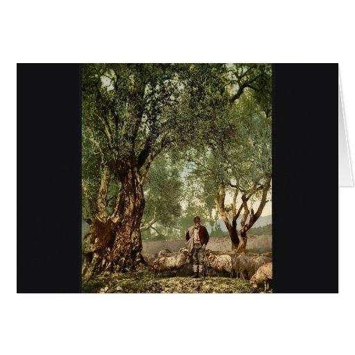 Shephard con multitud en la arboleda verde oliva,  felicitacion