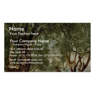 Shephard con multitud en la arboleda verde oliva,  tarjetas personales