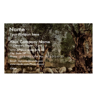 Shephard que tiende ovejas en la arboleda verde ol plantilla de tarjeta de visita