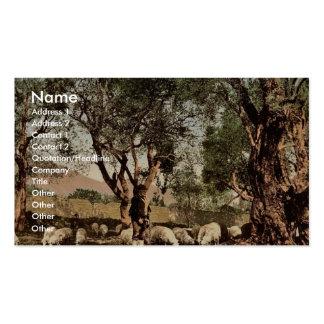 Shephard que tiende ovejas en la arboleda verde ol plantillas de tarjetas personales