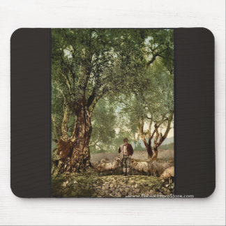 Shephard with flock in olive grove, Mentone, River Mouse Pad