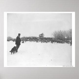 Shepherd and dog at sheep camp poster