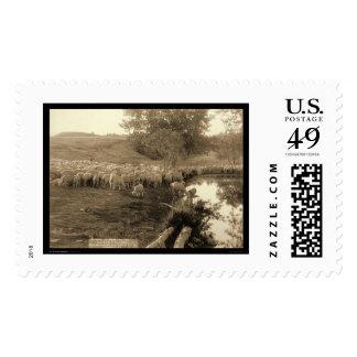 Shepherd and Flock South Dakota 1891 Postage Stamp