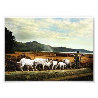 shepherd boy photo print