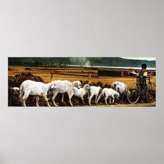 shepherd boy poster