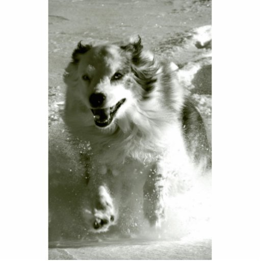 Shepherd Dog Running In Snow, Cut Outs