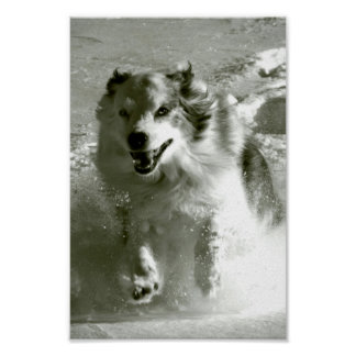 Shepherd Dog Running In Snow, Poster