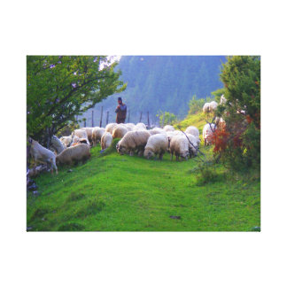 Shepherd in Fundata, Romania Canvas Print
