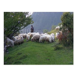 Shepherd in Fundata, Romania Postcard