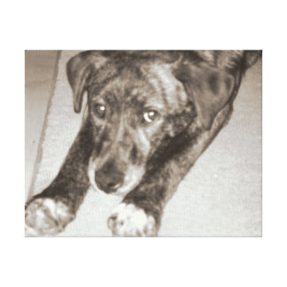Shepherd Mix Gallery Wrapped Canvas