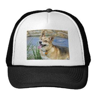 Shepherd Mix Rescue Dog Rupert Ball Cap Trucker Hat