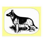 Shepherd Profile Postcard