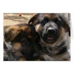 Shepherd Puppies Card