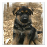 Shepherd Puppy Invitations