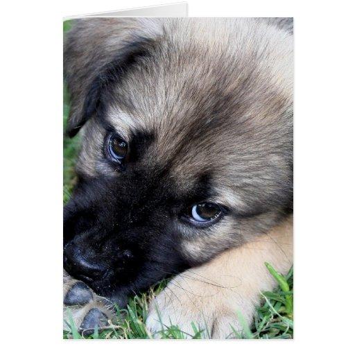 Shepherd Puppy Photo Greeting Card