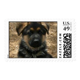 Shepherd Puppy  Postage Stamp