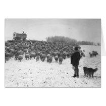 Shepherd with Flock cards