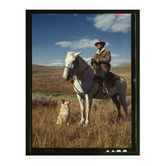 Shepherd with his horse and dog on Gravelly Range Postcard