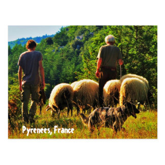 Shepherding in France Postcard