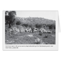 Shepherds and sheep outside of Bethlehem