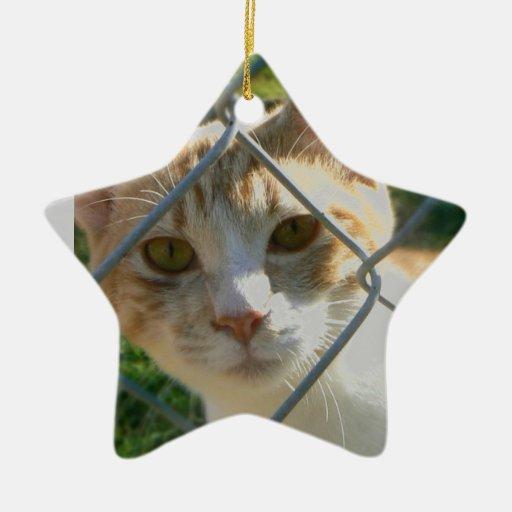 Sherbert de la esperanza pasada adorno navideño de cerámica en forma de estrella