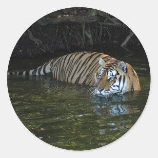 Shere-Khan-b-17 Sticker