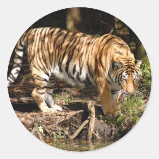 Shere-Khan-b-22 Sticker