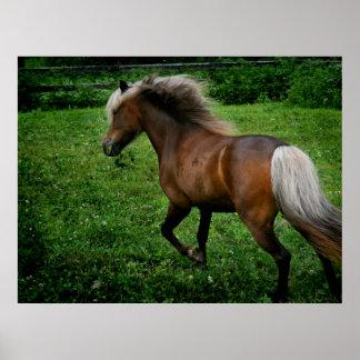 Shetland Pony 2 Poster