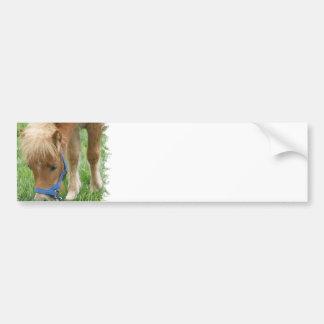 Shetland Pony Bumper Stickers