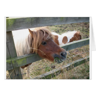 Shetland Pony Card (5019)