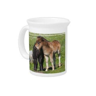 Shetland Pony Foals Pitcher