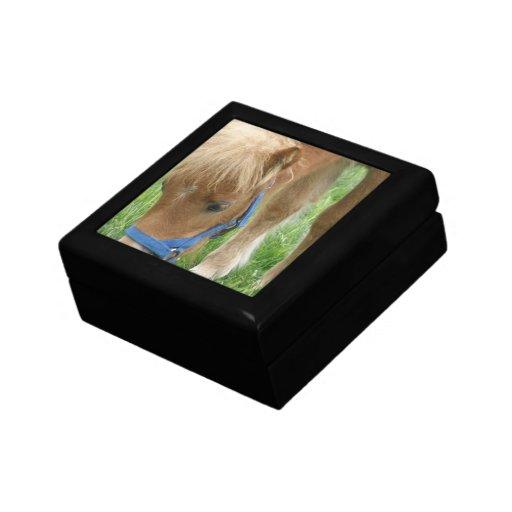 Shetland Pony  Gift Box