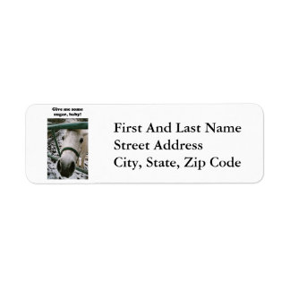 Shetland Pony Give Me Some Sugar Funny Photo Return Address Label