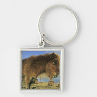 Shetland Pony, mainland Shetland Islands, 2 Silver-Colored Square Keychain