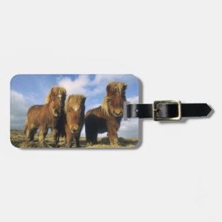 Shetland Pony, mainland Shetland Islands, Luggage Tag