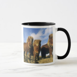 Shetland Pony, mainland Shetland Islands, Mug
