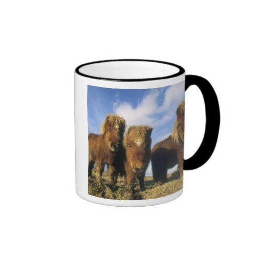 Shetland Pony, mainland Shetland Islands, Coffee Mugs