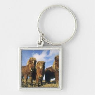 Shetland Pony, mainland Shetland Islands, Silver-Colored Square Keychain