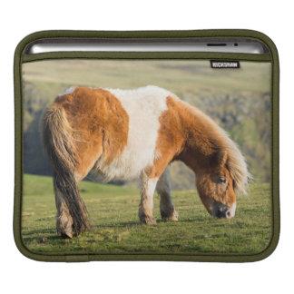 Shetland Pony On Pasture Near High Cliffs iPad Sleeve