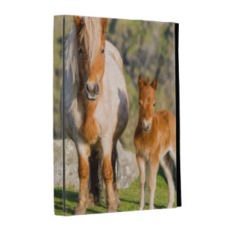 Shetland Pony On Pasture Near High Cliffs, Mare 2 iPad Cases