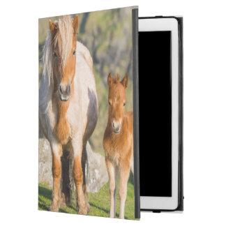 "Shetland Pony On Pasture Near High Cliffs, Mare 2 iPad Pro 12.9"" Case"