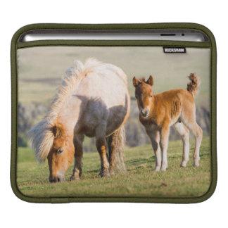 Shetland Pony On Pasture Near High Cliffs, Mare iPad Sleeve
