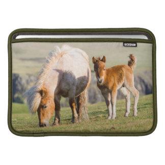 Shetland Pony On Pasture Near High Cliffs, Mare MacBook Sleeve