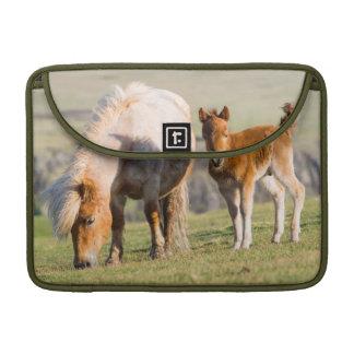 Shetland Pony On Pasture Near High Cliffs, Mare Sleeve For MacBooks