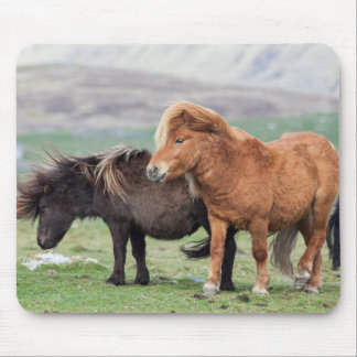 Shetland Pony, Shetland Islands, Scotland 2 Mouse Pad
