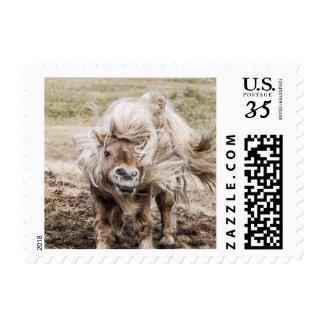 Shetland pony stallion postage stamp