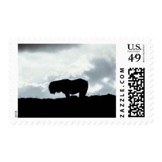 Shetland Pony Stamp